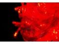 Lampki Choinkowe LED 100 czerwone