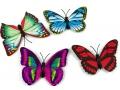 Motyle motylki na magnesy 3D