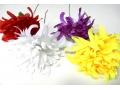 Kwiaty chryzantemy pojedyńcze